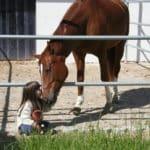 FEBS – Pferde- und Reiterlebnisse für Kinder von 3-8 Jahren